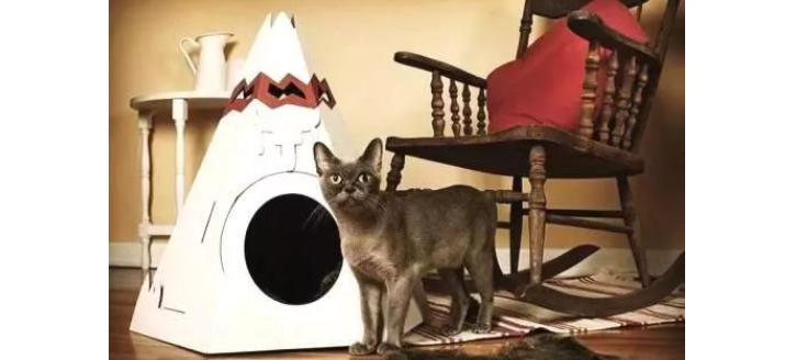 家里养有宠物该如何做房屋装修?